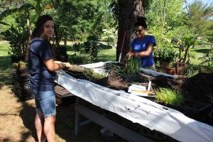 U.S. Fish and Wildlife interns Nicole Gabelman and Amara Huddleston transplant native grasses.